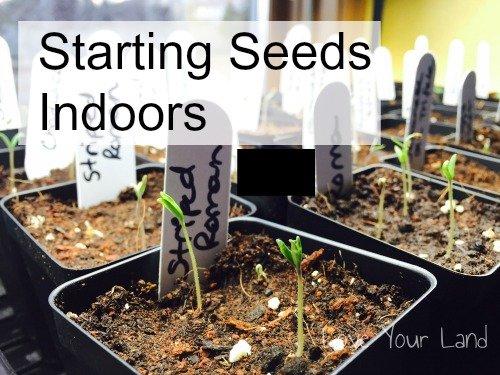 xstarting-seeds-indoors500.jpg.pagespeed.ic.URJQgMyI6O